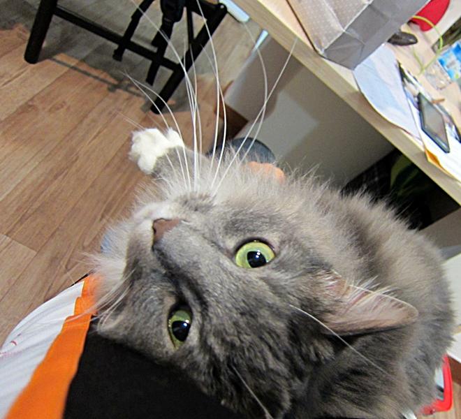 미유 탁묘 일지 - 무릎 고양이와 겨울 회색 쥐 -