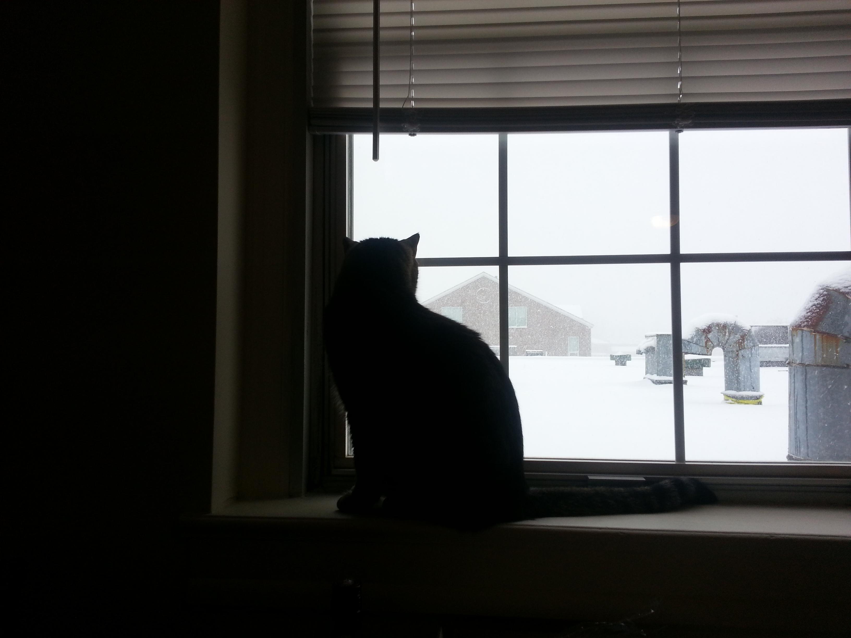 294. 눈 오는 날의 돌도리 2
