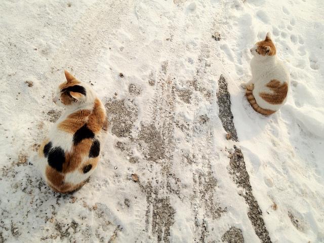 신년 첫날을 맞이한 우리집 고양이들