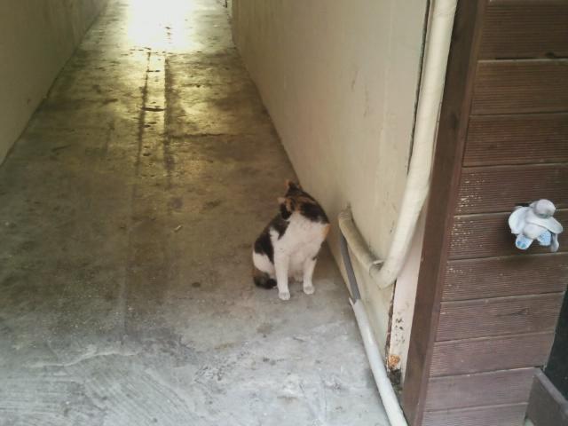 털고르기 시전하는 길고양이