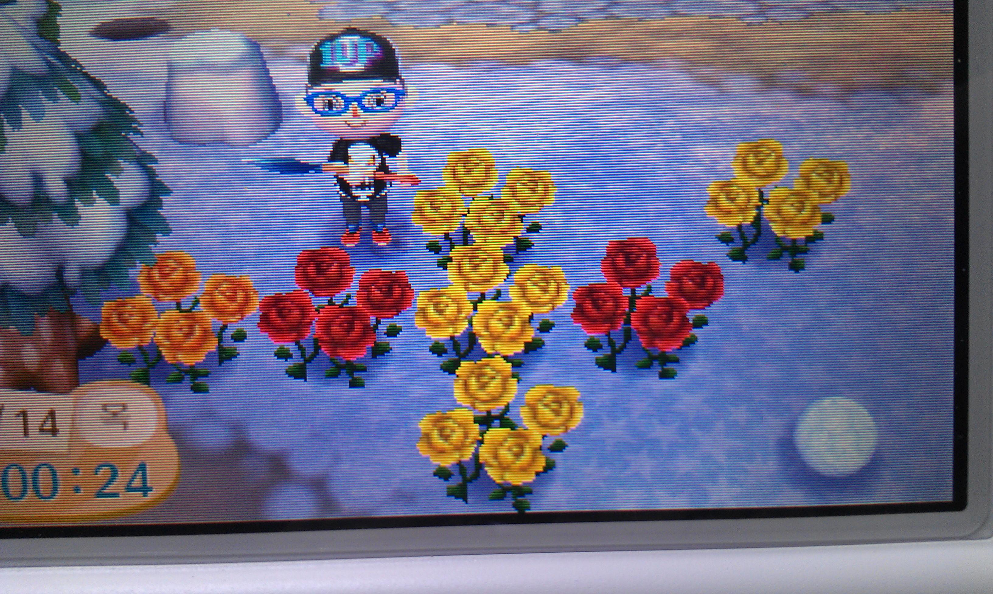 첫 꽃 교배