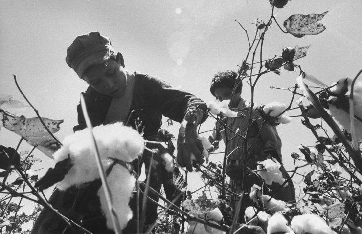 [LIFE]고난의 수확철, 1959년 미국 이주 노동자들