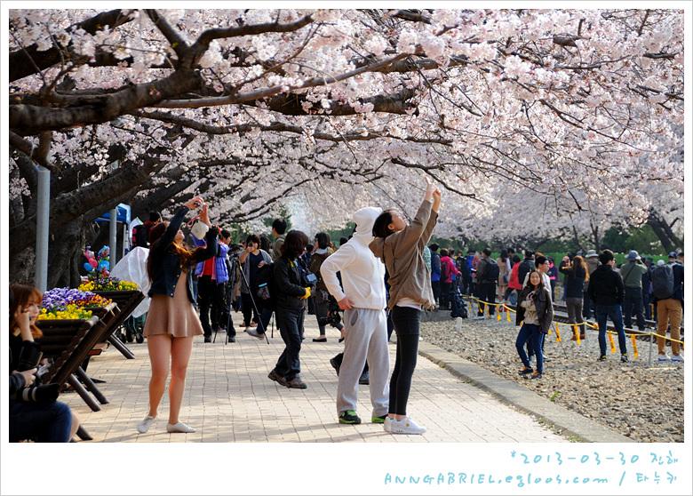 [진해] 경화역, 벚꽃 열차를 보다~