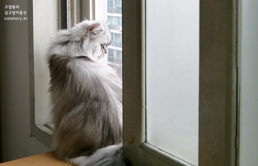 비오는 날, 고양이의 책상 전망대