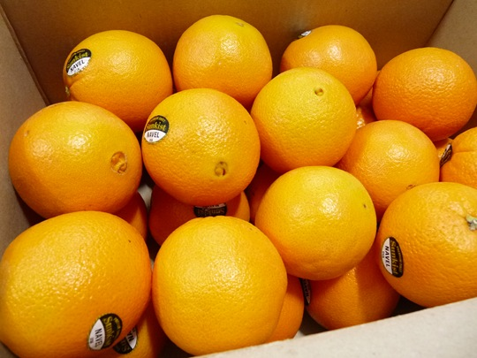 상큼한 아침에 먹는 달콤한 오렌지