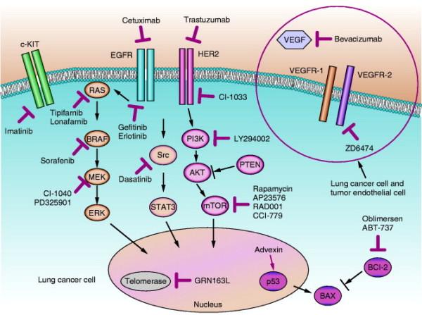 Targeting tyrosine kinases