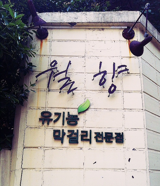 [맛집]월향