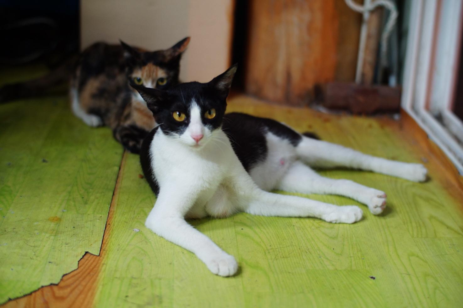 송정의 고양이들