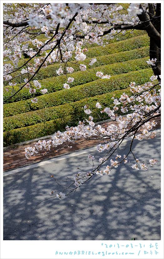 [하동] 만발한 십리벚꽃길을 걸으며