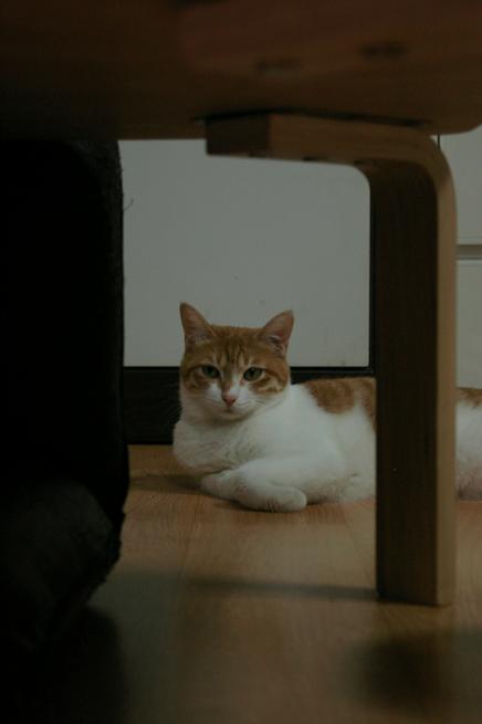 의자 아래 시크녀