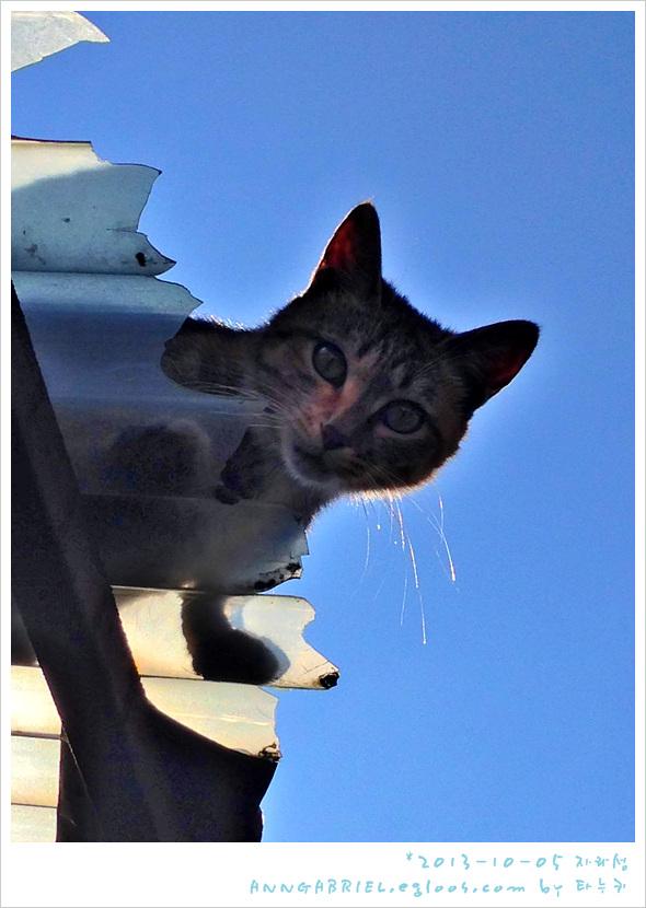 슬레이트 위의 고양이