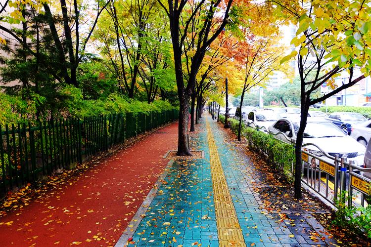7년만에 보는 한국의 가을 2013(중앙공원)