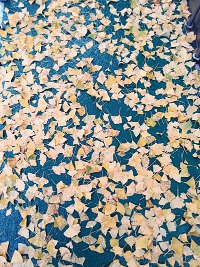 가을이 가버렸다