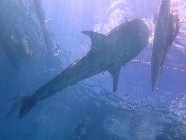 99.9% 확률로 고래상어가 등장하는 마을 '오슬롭'