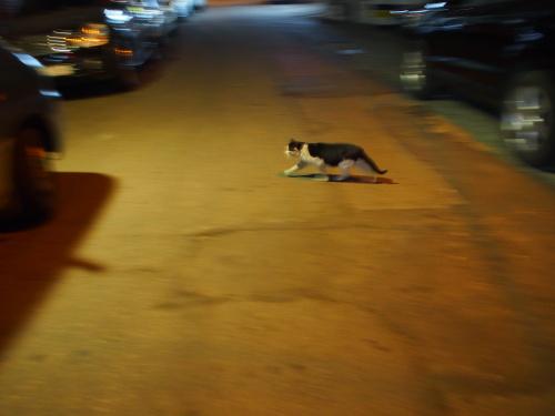 올림푸스 펜 E-P5로 찍은 길양이와 강아지