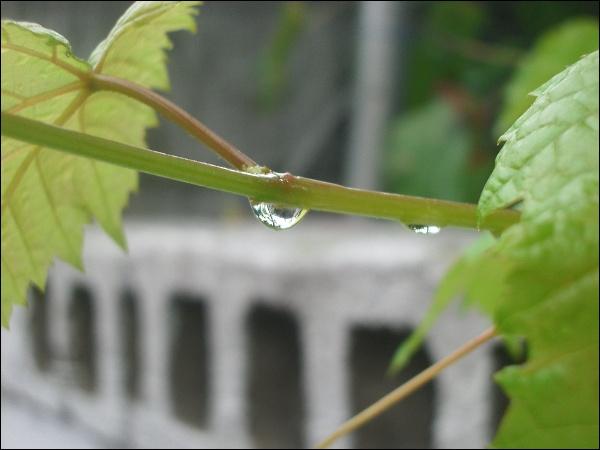 가을비 내린 풍경, 물방울