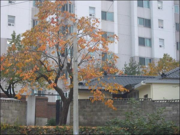 펜탁스 옵티오 T20 테스트, 일상 풍경, 단풍 낙엽 등
