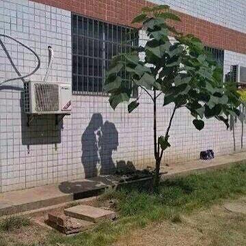 나무의 그림자가 연인들처럼 보이는 절묘한 사진?