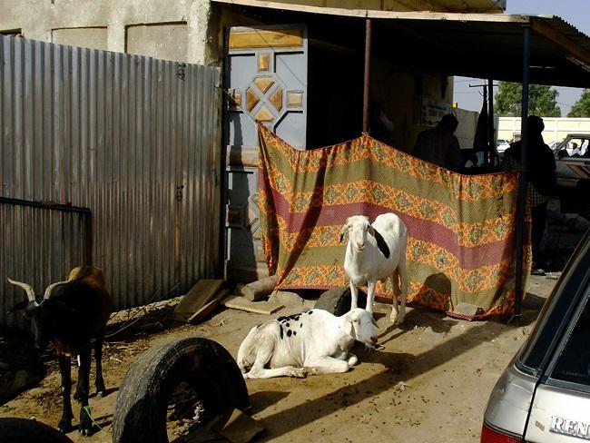 Lovely Africa #11.세네갈 - 뜨거운 사막 한 가..