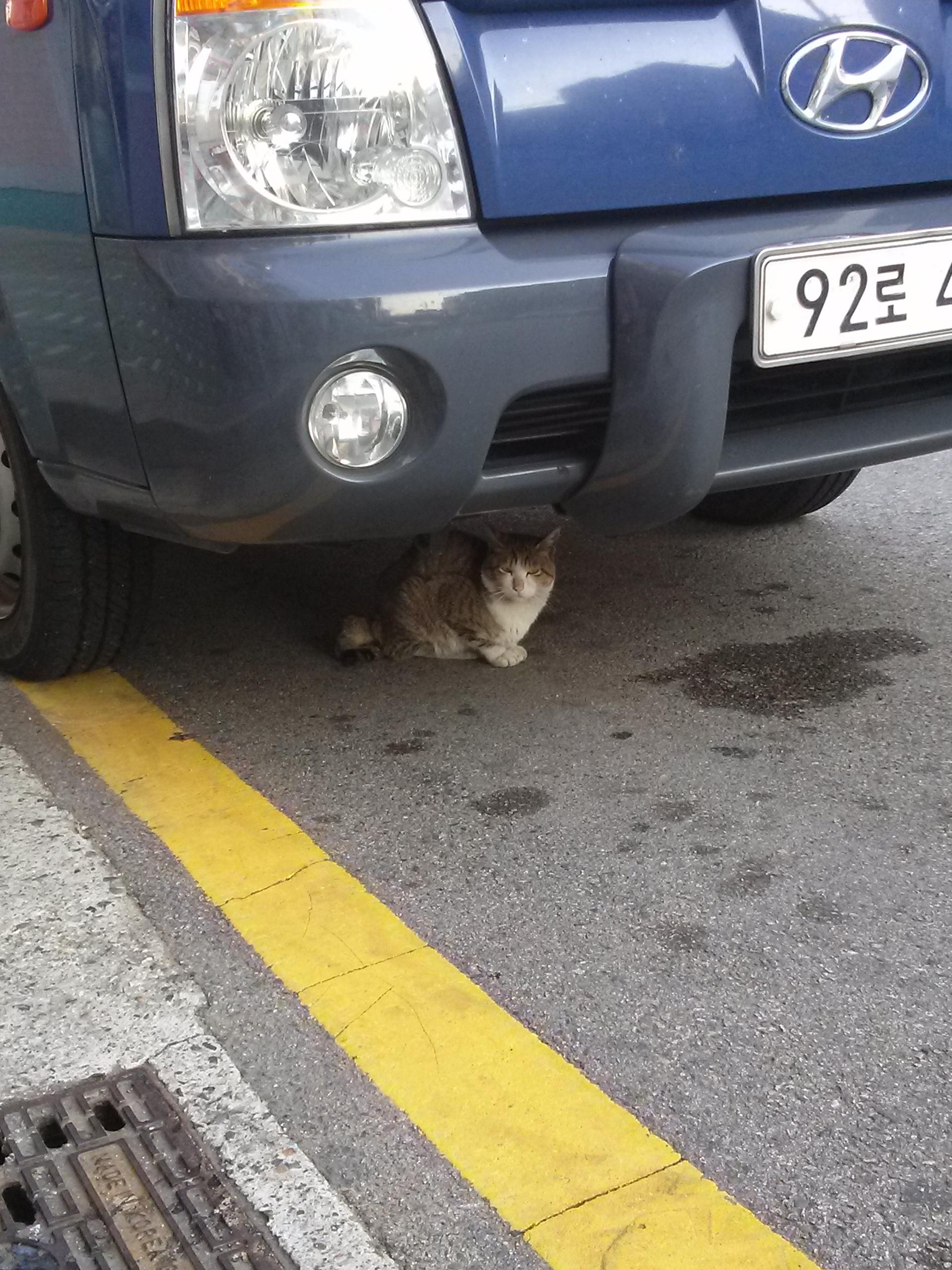 오늘의 고양이