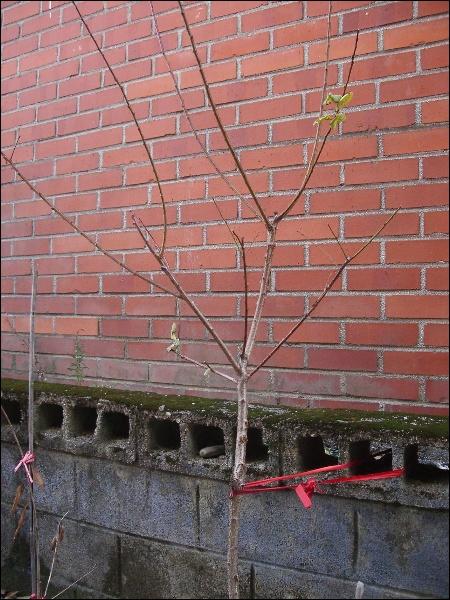 겨울, 매실나무 잎, 수도꼭지, 곤드레 잎의 벌레..