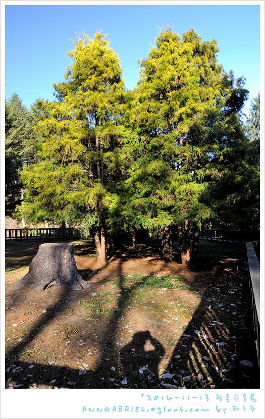 [광릉수목원] 가을 막바지에 한바퀴 - 2