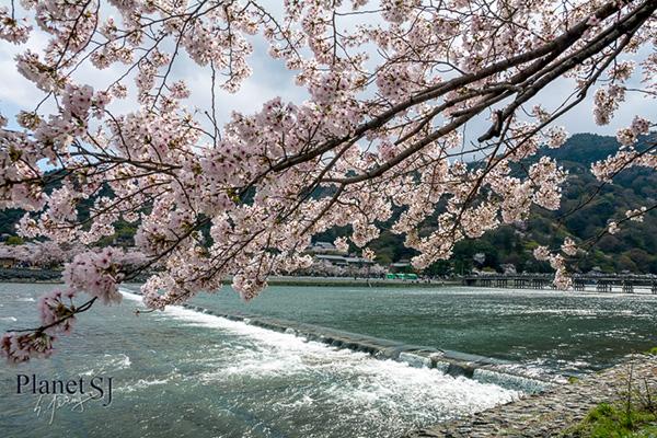 2014, Kyoto, Japan - Arashiyama Pt.2