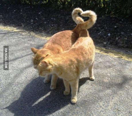 고양이 커플 하트