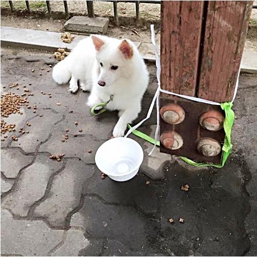 다양한 강아지 유기 방법, 착한 유기?