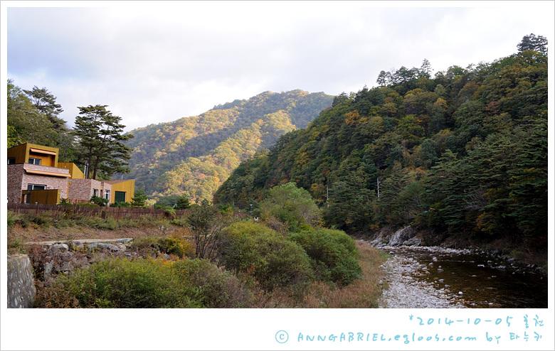[홍천] 노랑노랑 은행나무숲길