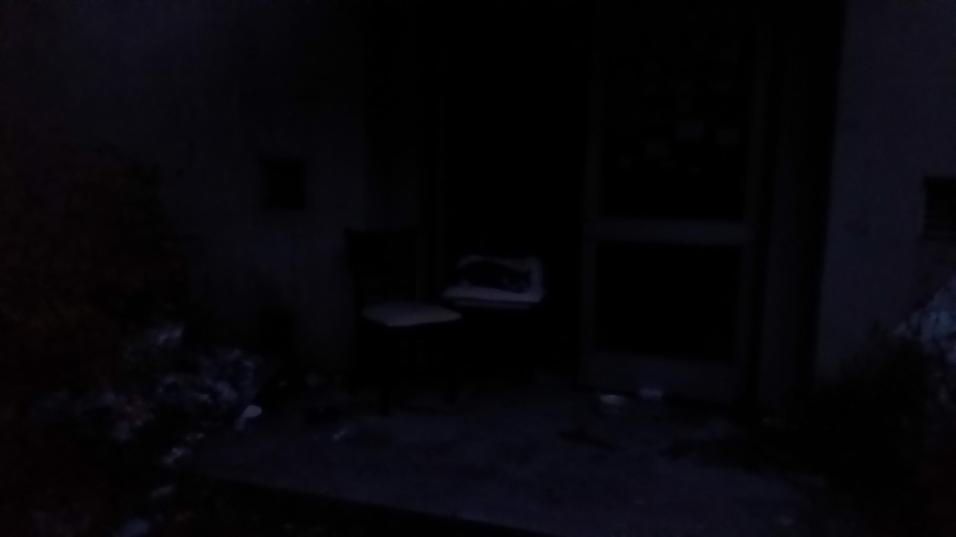 어두워서 플래시를 터트려봤습니다.