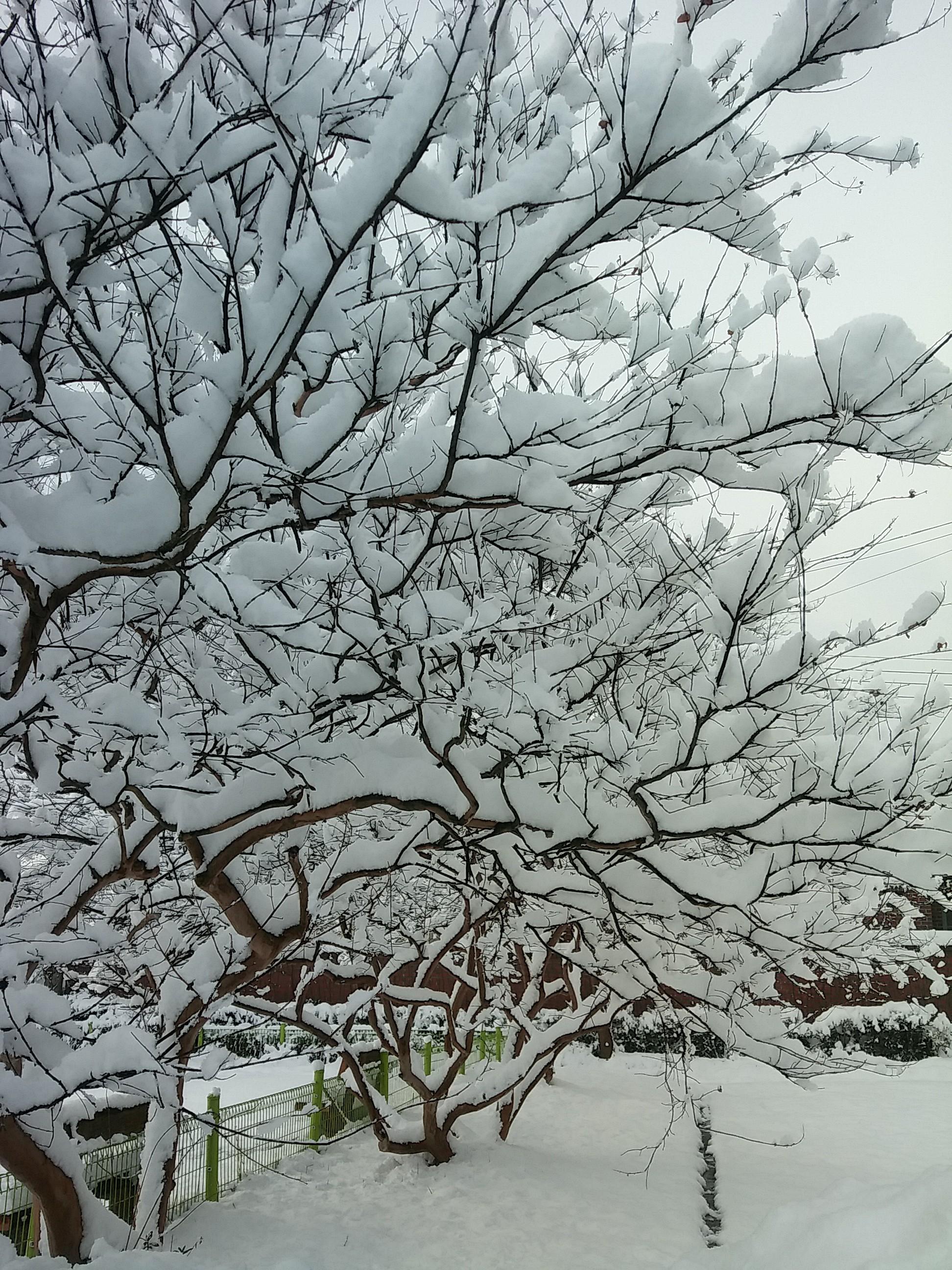 진짜 겨울이 온 듯