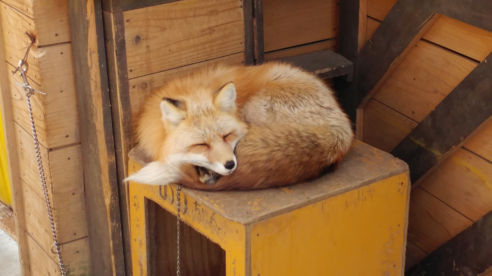 [일본/미야기] 자오 여우 마을 (Fox Village, ..