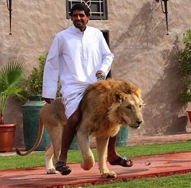 아랍의 부호「커다란 고양이 키울거라능!」