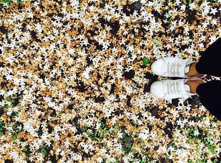 서귀포자연휴양림에서는 지천에 깔려 있는 하얀 ..
