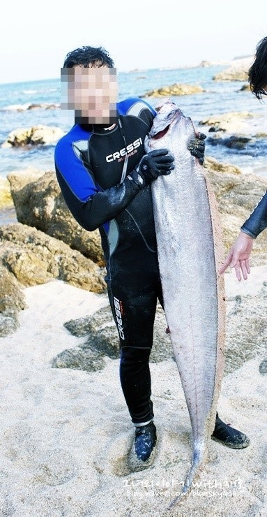 동해 울진 바닷가에서 발견된 산갈치