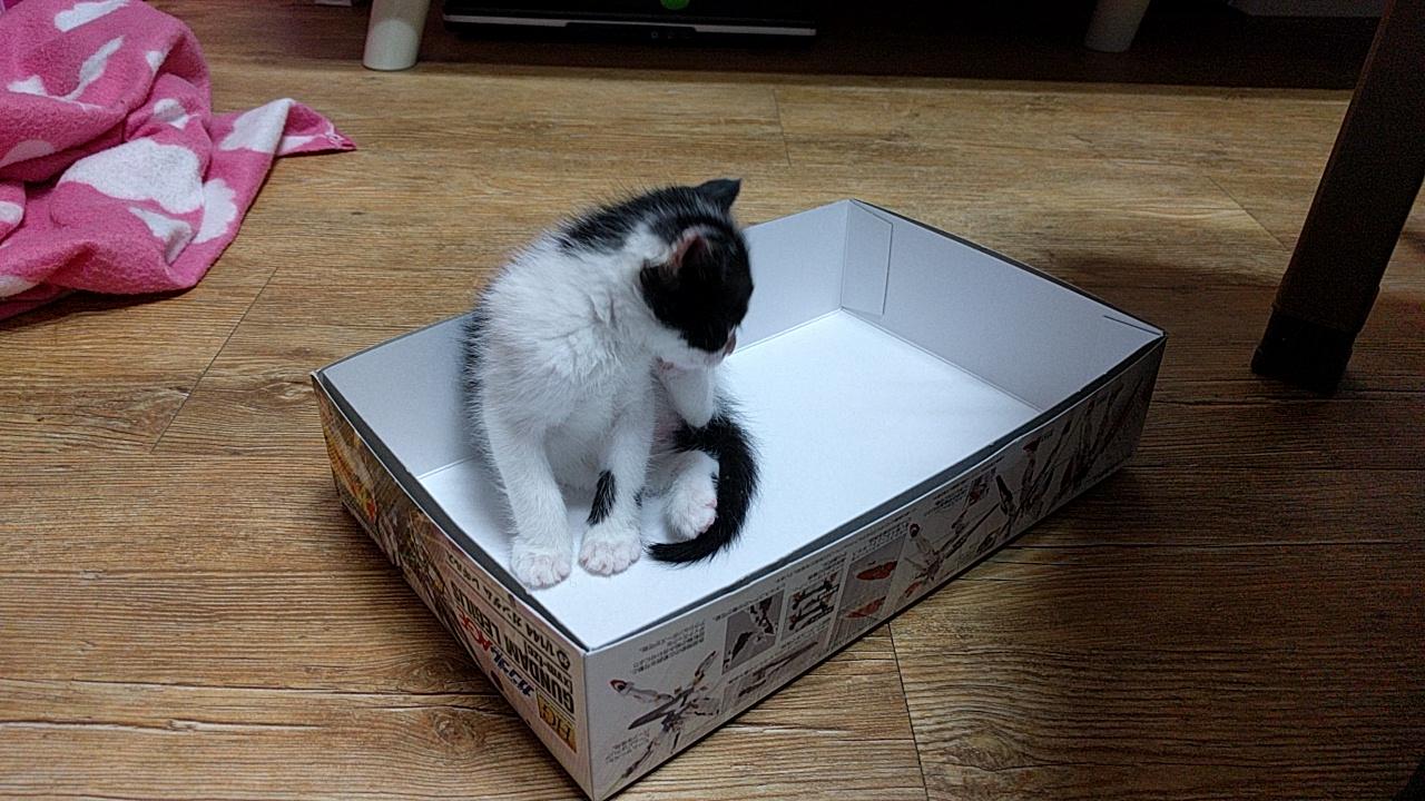 나도 고양이로소이다.