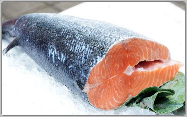 연어 이야기 (1) 연어는 흰 살 생선이다