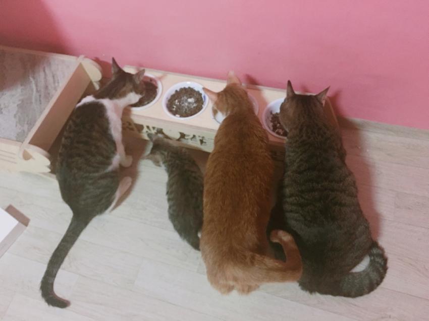 밥먹는 고양이들