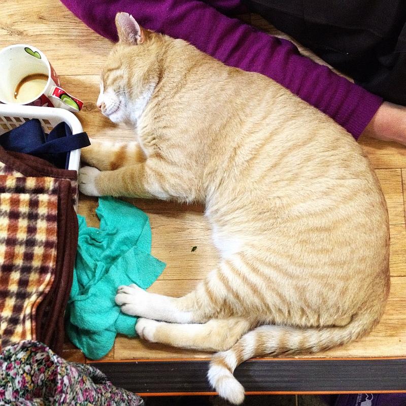 고양이들한테 제일 편안한 장소