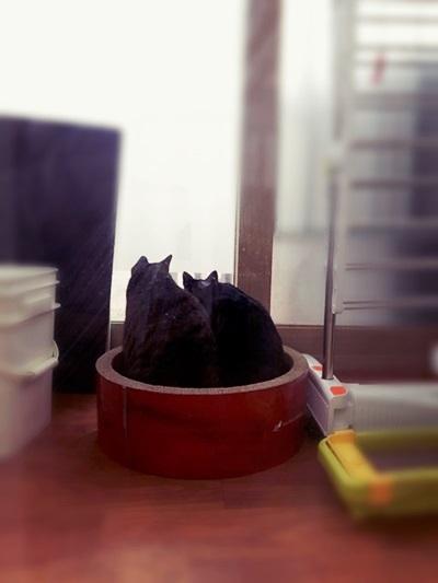 2016년 12월 새집의 고양이들