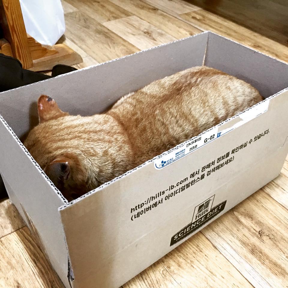 역시 박스보다 더 좋은 침대는 없었다....