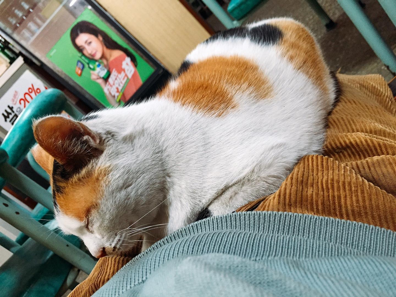 고양이와 함께 서로 온기를 나누는 계절