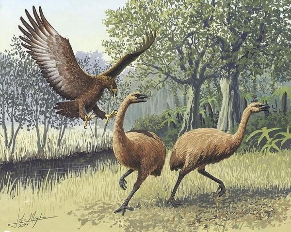 뉴질랜드에 있었던 거대한 새들...