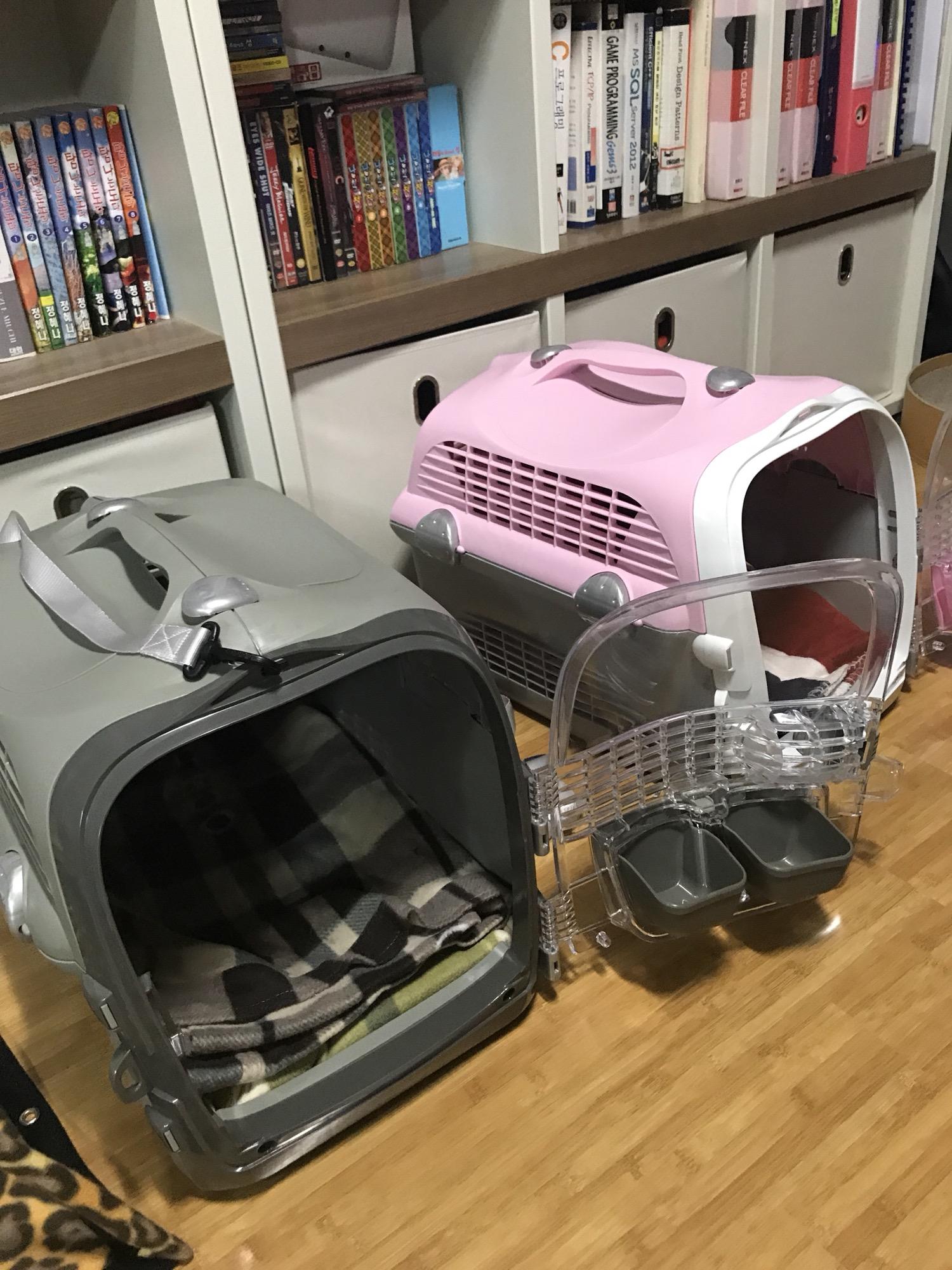고양이 일본검역 준비 및 1차방문