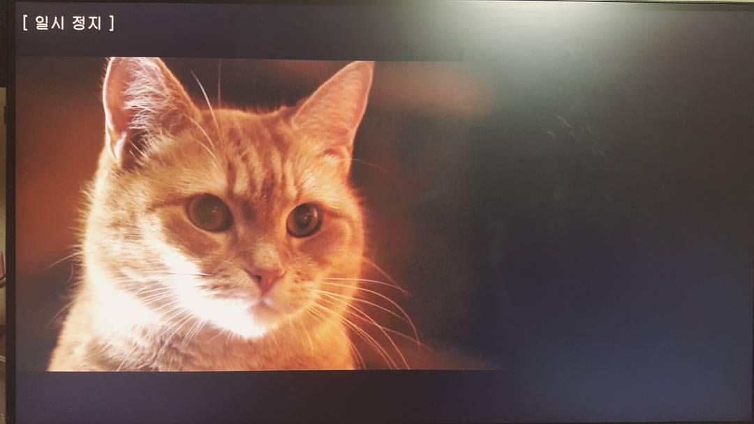 내 어깨 위 고양이 밥 , 2017