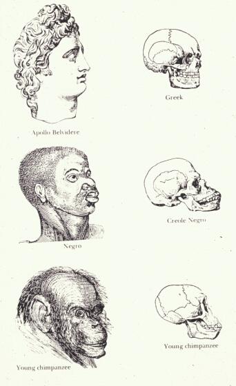 인종주의(racism)와 사회관