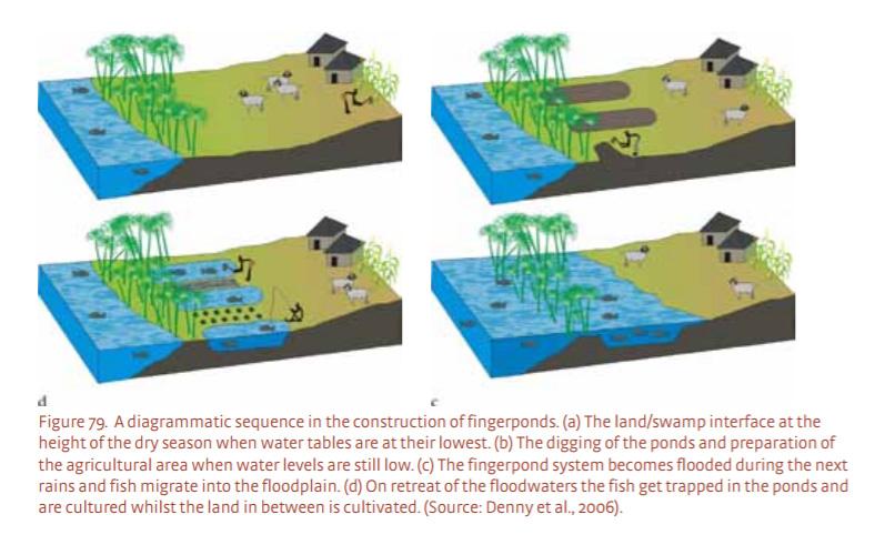 감수농법, 퇴수농법, flood recession farming