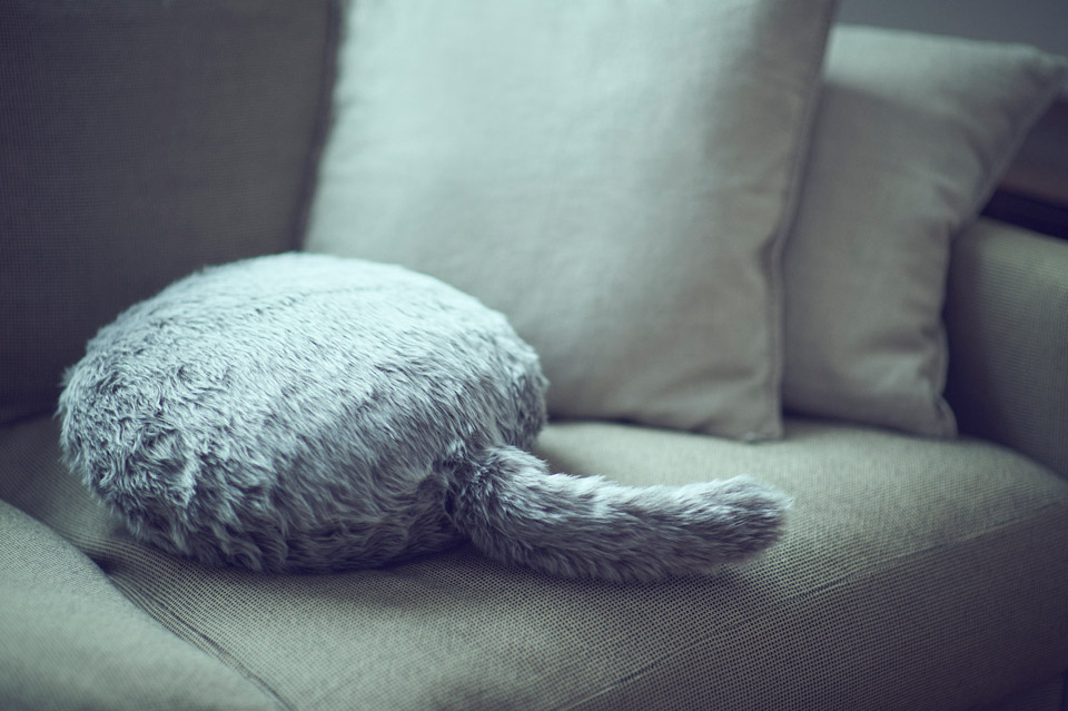 주간지름신 : 고양이는 없지만 QOOBO가 있으면 ..