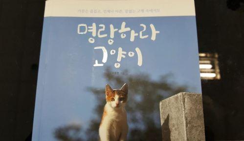[명랑하라 고양이]고양이로 피로 회복
